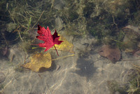 Autumn colors in the water