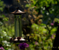 Silhouettes at the Humming Bird Feeder